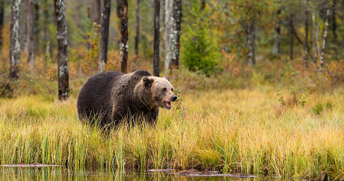 Co dělat, když se potkáme v medvědním lese